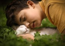 Teenager boy with cat in hummock nap stock photo