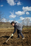 Teenager boy with a hoe sowing potatoes Stock Image