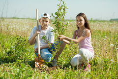 Teenager brother and sister sets tree. Outdoor Royalty Free Stock Photo