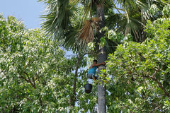 Teenager climbing a palm tree Royalty Free Stock Image