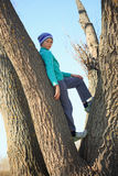 A teenager climbs trees in the spring Royalty Free Stock Photography