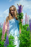 Teenager collects lupine flowers Stock Photo
