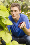 Teenager enjoying picking grapes royalty free stock photo