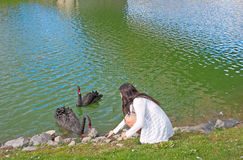 Teenager Feeds Black Swans Royalty Free Stock Photos