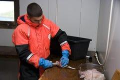 Teenager filleting fish stock photos