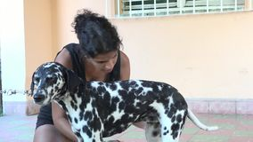 Teenager girl bathing a cute Dalmatian dog stock footage