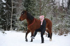 Teenager girl and brown horse walking through the forest togethe Stock Images