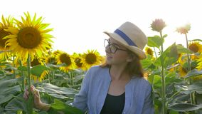 Teenager girl on field with sunflowers enjoy countryside beauty in the backlight. Teenager girl on field with sunflowers enjoy the countryside beauty in the stock footage