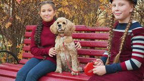 Teenager girl friends sitting with cocker spaniel dog on bench in autumn park. Two happy girls stroking dog on park