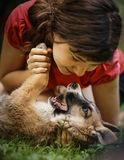 Teenager girl hug puppy shepherd dog close up photo. On green garden background Stock Images