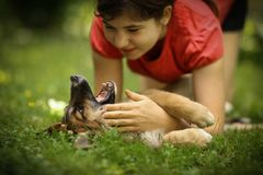 Teenager girl hug puppy shepherd dog close up photo. On green garden background Stock Photography