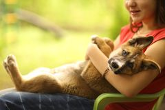 Teenager girl hug puppy shepherd dog close up photo. On green garden background Royalty Free Stock Images