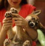 Teenager girl hug puppy shepherd dog close up photo Royalty Free Stock Photo