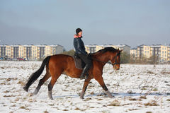 Teenager girl riding bay horse in winter Royalty Free Stock Photography