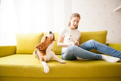 Cat and dog frienshop. Teenager girl with theri pets - cat and dog frienshop Royalty Free Stock Photo