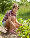 Teenager girl working in field royalty free stock photography
