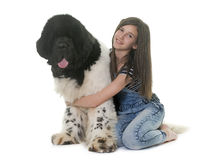 Teenager and newfoundland dog Stock Images