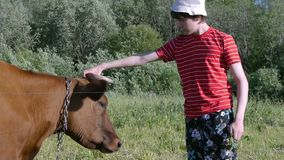 Teenager in pasture and stroking cow close up. Nice scene stock footage