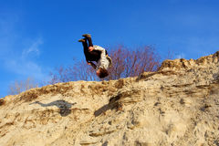 Teenager performs parkour. Back somersault from sand hill. Shot in the Dnieper sands, Ukraine Stock Photos