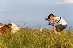 Teenager photographing a cow in nature. On the Schockl mountain near Graz in Styria stock images