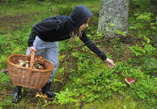 Teenager picking mashroom. Teenager found a big mushroom in rainy day Stock Photography
