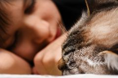 A teenager is sleeping on the bed with an animal cat. Teenager is sleeping on the bed with animal cat Stock Photos