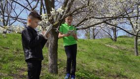 Two boys makes laboratory work exploring bloom of flowers in the park. Teenagers makes biology laboratory work in the park. The boys explores flowers on the tree stock video