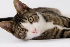 teenege кота милое Стоковые Изображения RF
