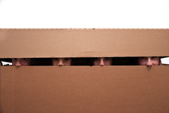 Free Teens Hidden In Moving Box Stock Photography - 65890492