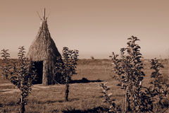 Teepee aka wigwam in the field with young trees. Vintage sepia toned image stock images