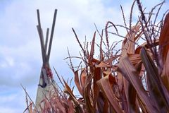 Teepee in a corn field royalty free stock image