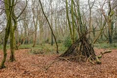 Teepee shape hide in a forest clearing. royalty free stock images