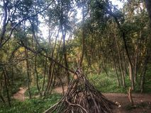Teepee in the woods. Out of tree branches royalty free stock images