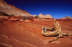 teepees för sandsten för buttesprärievarg norr Arkivfoto