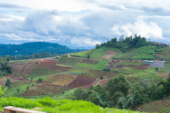 Teeplantage auf Berg, schöne Naturlandschaft Lizenzfreies Stockbild