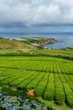 Teeplantage auf der Nordküste von Sao Miguel Island in den Azoren Ländliche Landschaft mit wachsendem Bauernhof des Tees Schöne H stockbild