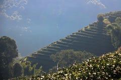 Teeplantage auf Hügel Lizenzfreies Stockbild