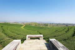 Teeplantage bei Mae Chan, Chiang Rai, Thailand Ansicht von Teewinkel des leistungshebels Lizenzfreies Stockfoto