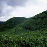 Teeplantage in Munnar, Kerala, Indien Stockbild