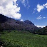 Teeplantage in Munnar, Kerala, Indien Stockfoto