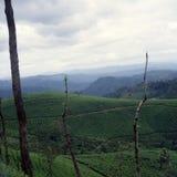 Teeplantage in Munnar, Kerala, Indien Stockfotos