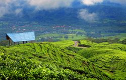Teeplantage in Pagar Alam East Sumatera Indonesia lizenzfreies stockbild