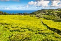Teeplantage in Porto Formoso Erstaunliche Landschaft von outstandin stockfotografie
