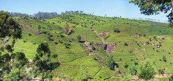 Teeplantagen auf dem Berg Lizenzfreie Stockbilder