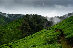 Teeplantagen in Cameron Highlands, Malaysia stockfotografie