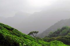 Teeplantagen in Kerala Stockfotografie