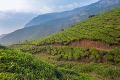 Teeplantagen in Munnar, Kerala, Indien Lizenzfreies Stockbild