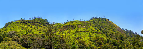 Teeplantagen in Munnar, Kerala, Indien Stockfotografie