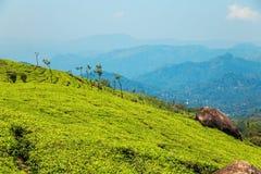 Teeplantagen in Munnar, Kerala, Indien Lizenzfreie Stockfotografie