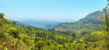 Teeplantagen in Munnar, Kerala, Indien Lizenzfreies Stockfoto